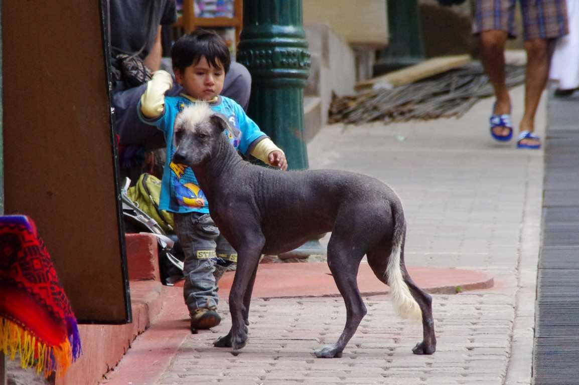 K1024_Bolivia2015-080.JPG