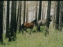 Sibirien 2001